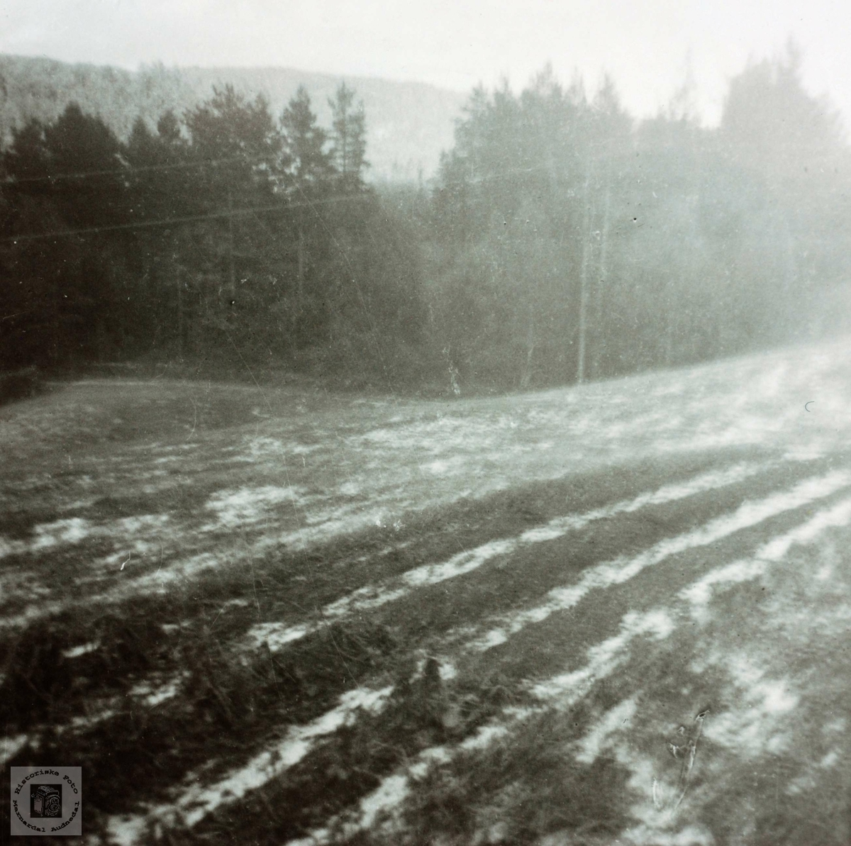 Potetriset har frosset etter en snøbyge i juli!