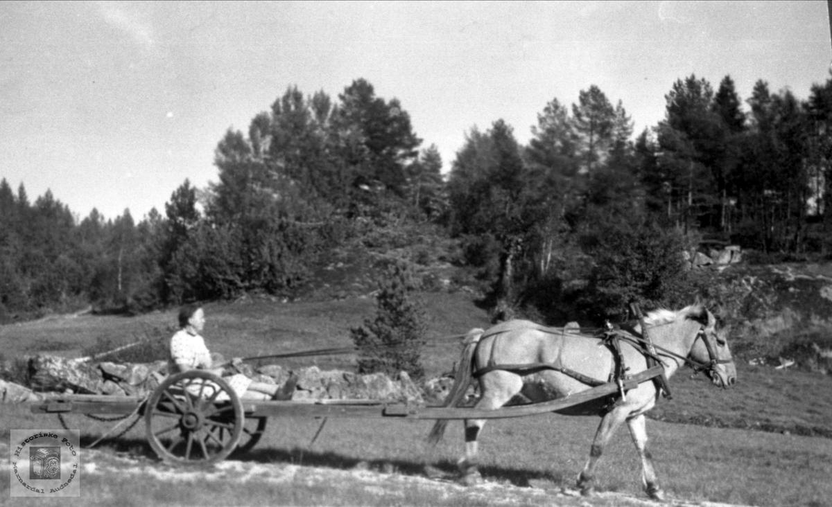 Maria Røynesdal klar for oppdrag med langkjerre og hest, Bjelland.