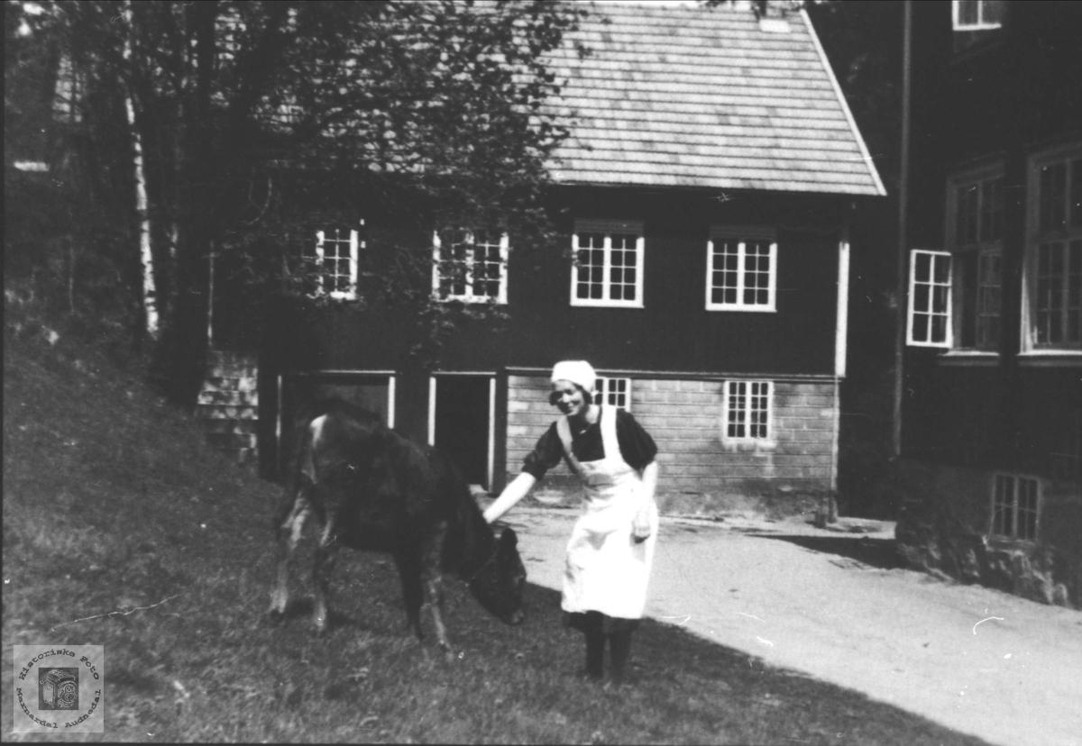 Dyrehold på Høgtun, Øyslebø. Solveig Liestøl med kalven.