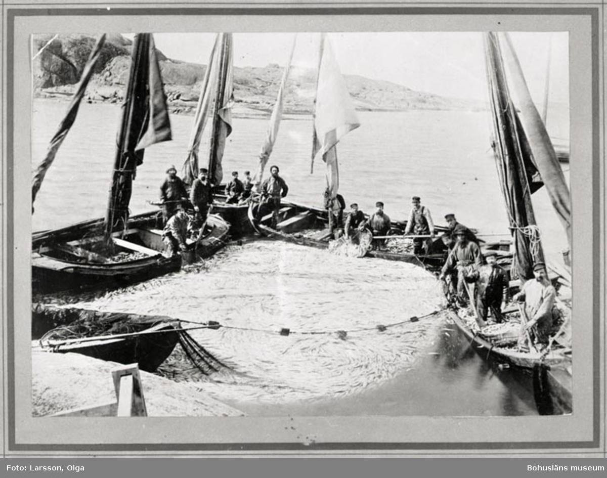 Sillfiske vid Fjällbacka i april 1894