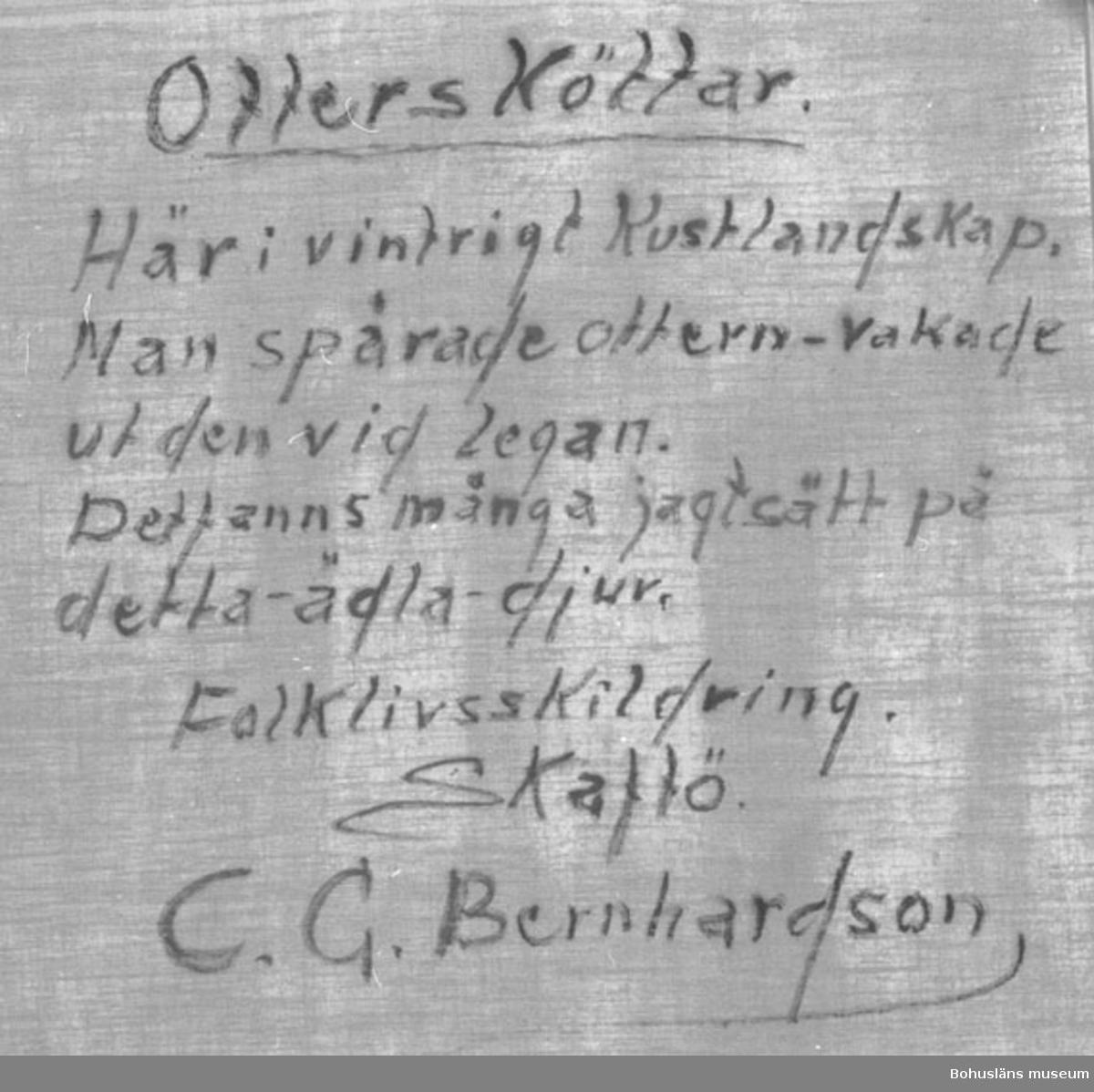 """Baksidestext:  """"Ottersköttar.  Här i vintrigt Kustlandskap. Man spårade ottern - vakade ut den vid legan. Det fanns många jagtsätt på detta - ädla - djur.  Folklivsskildring. Skaftö. C.G. Bernhardson.""""  Ordförklaring: Lega = liggplats, tillfälligt bo.  Litt.: Bernhardson, C.G.: Bohuslänsk sed och folktro, Uddevalla, 1982, s. 140. Titel i boken: """"Ottersköttar. Förr fanns det här på kusten tre fyra utterjägare, som året runt jagade utter. Som binäring höll man vanligtvis ett litet jordbruk, som födde en ko, annars  var det jakt och fiske som stod för merparten av upphället. För utterjakt var marken den tiden obegränsad, hela kustbandet stod till förfogande. Som transportmedel användem man sig av däcksbåtar (små jakter). Dessa båtar voro inredda med plekt, styrbrunn och rum för utrustning. I plekta fanns utrymme för ett par kojplatser och någonting att värma lite mat på. Som proviant medförde man bröd, smôlt och potäter. Övrigt fick man under färden - fisk, kött etc. Varje jakttur kunde dra utr flera veckor och ofta passerades landgränser. Uttern sköts vid grytutgången. Det fanns måmga hemliga sätt att ta ut uttern, inga glömda och inga nämnda, man var noga med sådant den tiden. Tidsbild 1890-talet.""""  Ordförklaring: Plikt =  mindre däck el. toft vid förstäv eller akterstäv på en öppen båt avsett som förvarings- eller sovplats, ibland med en lucka för ingången, skans, sjöterm.  Övrig historik; se CGB001."""