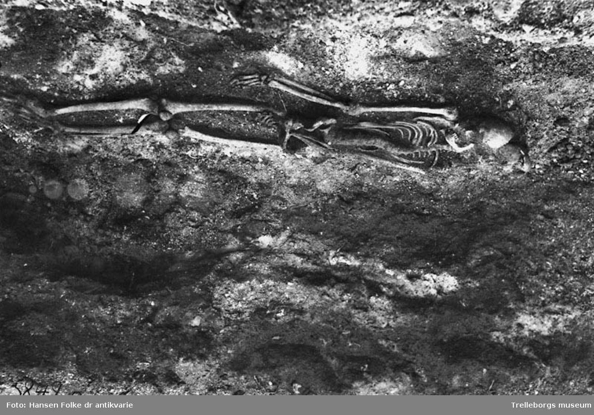 Skelettgrav funnen på stadsägan 140, Sjöviks tegelbruk i Trelleborg. Skelettet är det underst liggande och fotot är taget från väster. Accessionsboken: Förklaring till gravfynden: Skelettet c-e var försatt med en förrostad järnkniv, vilken sannolikt varit försedd med träskaft. Det överst liggande skelettet hade ingen utrustning med sig. Man lade märke till att det översta var jordat med ansiktet vänt mot östern under det att det underst liggande vände huvudet mot väst. Båda ligger över varandra i samma grav. Jordtjockleken mellan de båda var cirka 400 milimeter. Båda ligger med huvudena i nord, något orienterade mot öster. I samma grav förekom andra rester av ett mycket litet barns skelett, derav en arm och ett revben.