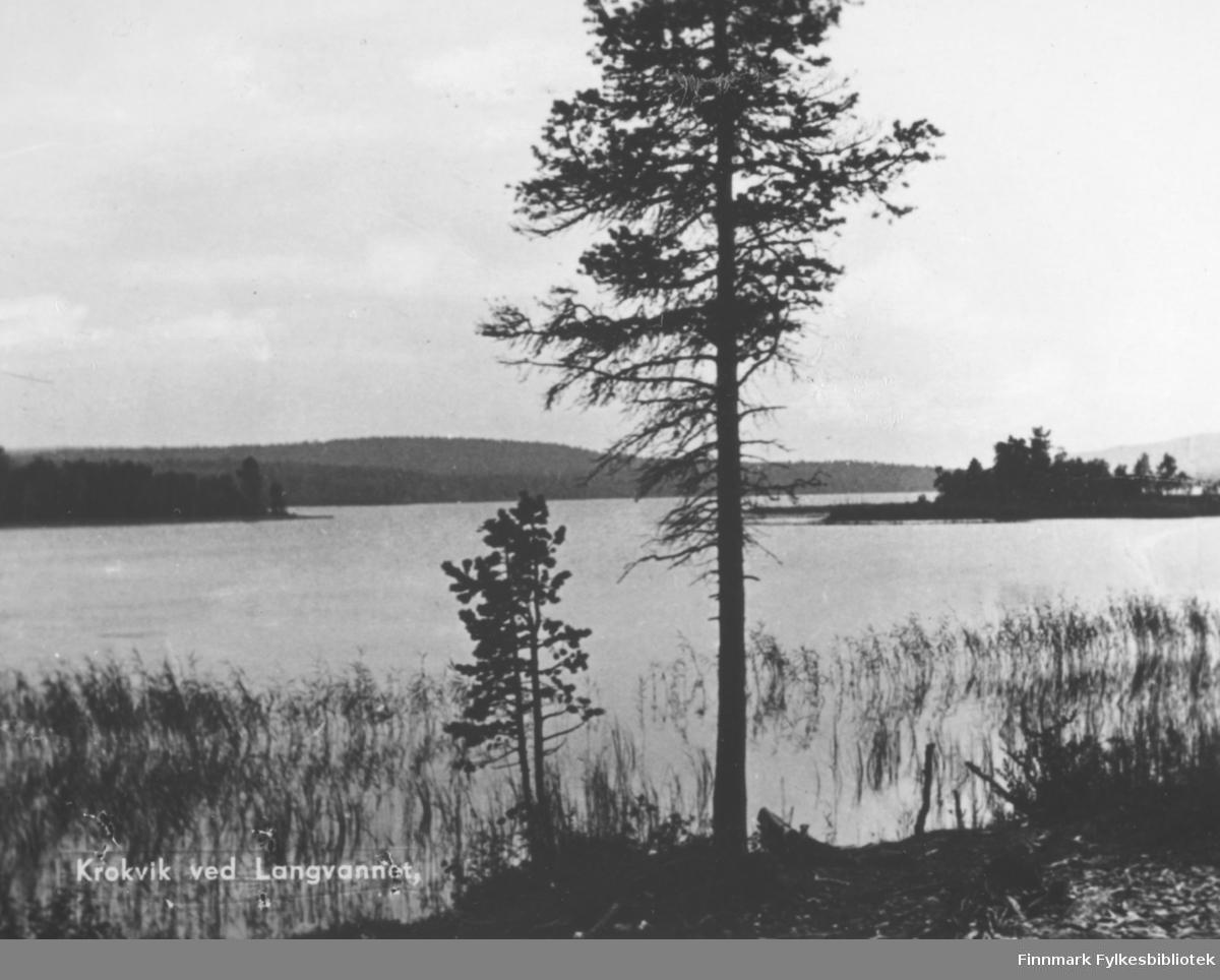Postkort fra Krokvik ved langvannet. På fotografiet ser man utover langvannet. Det stikker ut noen holmer med trær på. Midt på bildet står det en høy furu. I vannet nært land er det vekster. Bak det rolige vannet ser vi trekledt fjell