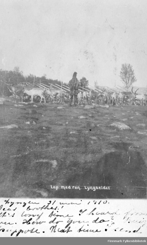 Postkort fra Lyngseidet. Under fotografiet står det en hilsen til en bror skrevet på engelsk, datert 31. mai 1910 Lyngen. På bildet ser man en same stå med ryggen til kledt i kofte og lue. Han står og ser på en reinflokk ved et reingjerde. I bakgrunnen er det skog