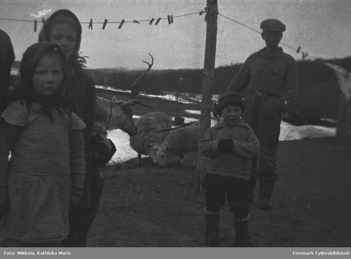Barn og ungdommer ute på Mikkelsnes, ca. 1937-1938. Fra venstre Herlaug og Astrid Mikkola, Trygve Dørmænen (foran) og Andreas Mikkola. Andreas har arbeidskjeledress på. I bakgrunnen klesvask på snora, et par sauer og en kjørerein