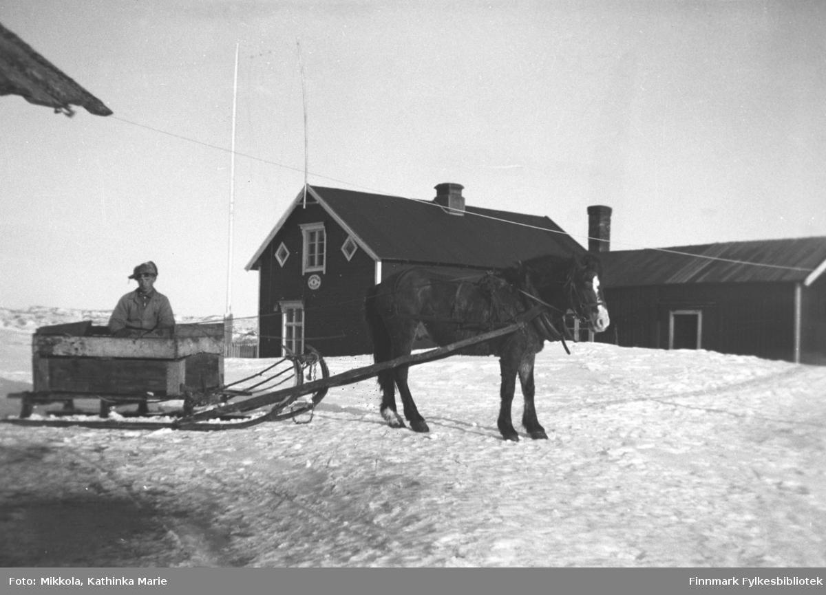 Andreas Mikkola og hesten Borken som er forspent en slede. De kjører lodde med kasser til bikkvogna med karm. I bakgrunnen våningshuset på gården, med skilt merket Talestasjon på veggen