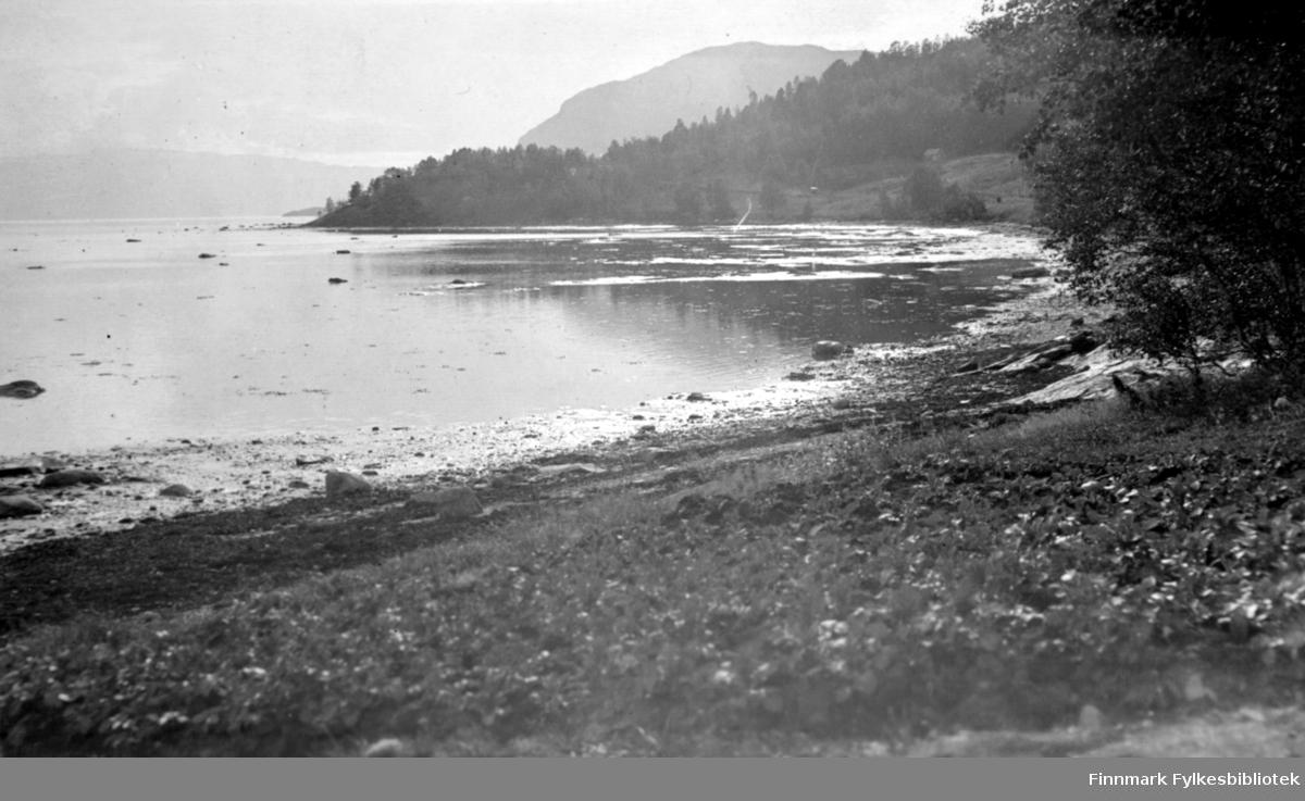 En blikkstille sjø ved Rafsbotn i Alta. Foran på bildet er det gress og litt blomster. Det er veldig langgrunt og steiner kan ses i vannet langt utpå fjorden. Det ligger en stripe tare i flomålet og i fjæra innerst ligger mye steiner. Helt til høyre står et ganske stort tre. Et nes, sannsynligvis Moseneset, med mye trær ses midt på bildet. Fjellet som ses litt diffust bak neset er sannsynligvis Raudbergbuktfjellet.