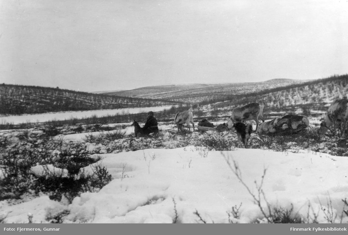 Mari-Hanna Bær og hunden Renni sitter i terrenget med noen reinsdyr bak seg. Bildet er tatt i fjellet ovenfor Kjæs i Porsanger kommune i april/mai 1948.