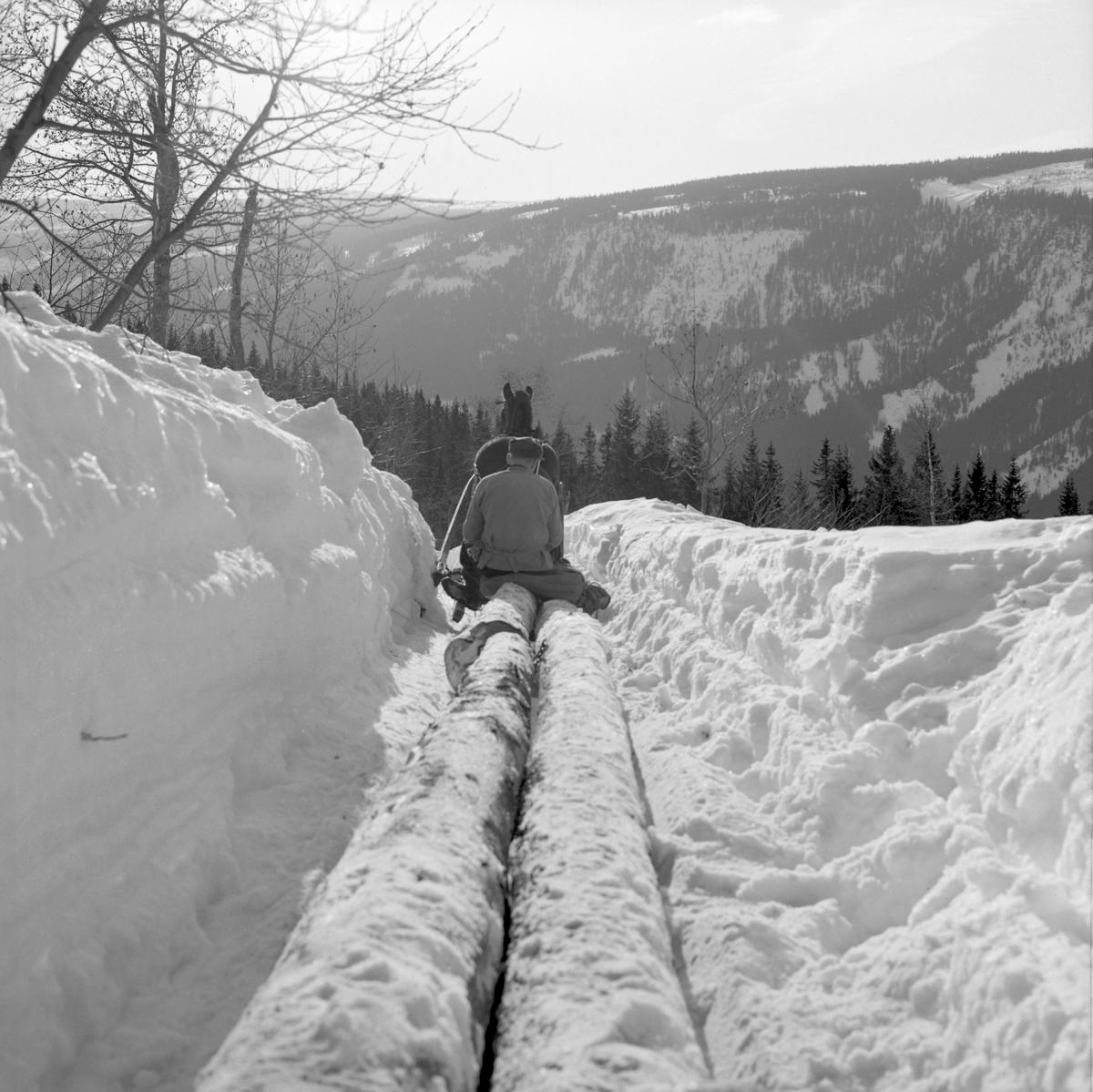 Hankekjøring av tømmer med hest i Vestre Gausdal vinteren 1967. Fotografiet er tatt bakfra, på et sted der det var måkt en hesteveg i djupsnøen, mot en bakkekam øverst i ei bratt li. Bildet illustrerer hvordan tømmerstokkene, som alle var «øyete» i toppendene, var sortert og kjedet sammen bak stuttingen. De største og tyngste stokkene ble lagt fremst, med endene på «stuttingen» (en liten slede). Videre bakover ble stokkene lagt - to til fire i bredden - toppendene fram og rotendene bakover. Kjørekaren tredde ei baklenke gjennom «øynene» på stokkene, og slo jernbleiene («pjeksene») i ytterendene av disse kjettingkoplene inn i endeflatene på foranliggende stokker. Når kjøringa startet satte kjørekaren seg på de stokkendene som kvilte på banken (tverrtreet) på stuttingen. Fotografiet ble tatt i mars 1967, da Kjell Søgård og Tore Fossum fra Norsk Skogbruksmuseum gjorde opptak til en kulturhistorisk dokumentarfilm om tømmerkjøringstradisjoner i Vestre Gausdal.