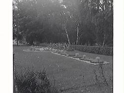 Järnvägsparken med kaktusplanteringen 1948 som då hade mönst