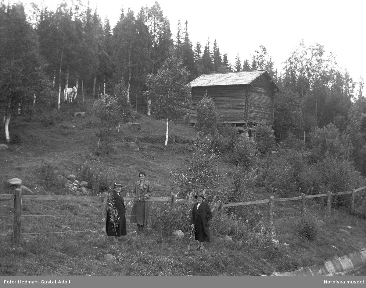 Tre kvinnor vid staket nedanför timmerlada. En fjällko skymtar mellan träden.