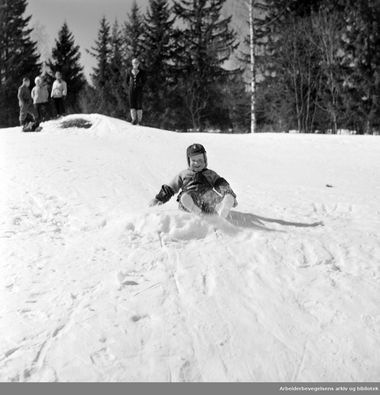 Gutt leker i snøen. Nordmarka. April 1958.