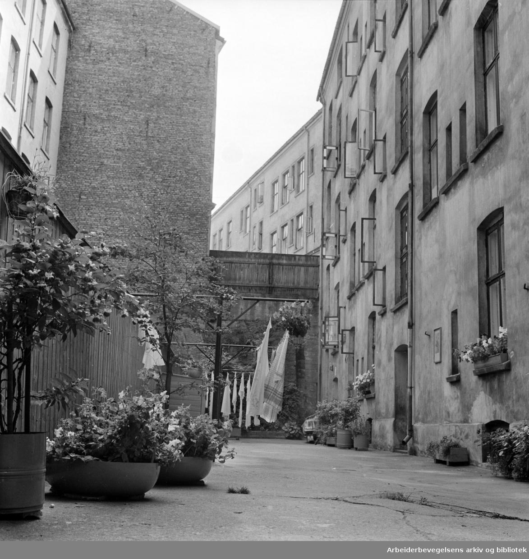 Vibesgate 13. Blomstrende bakgård på Majorstua. August 1964