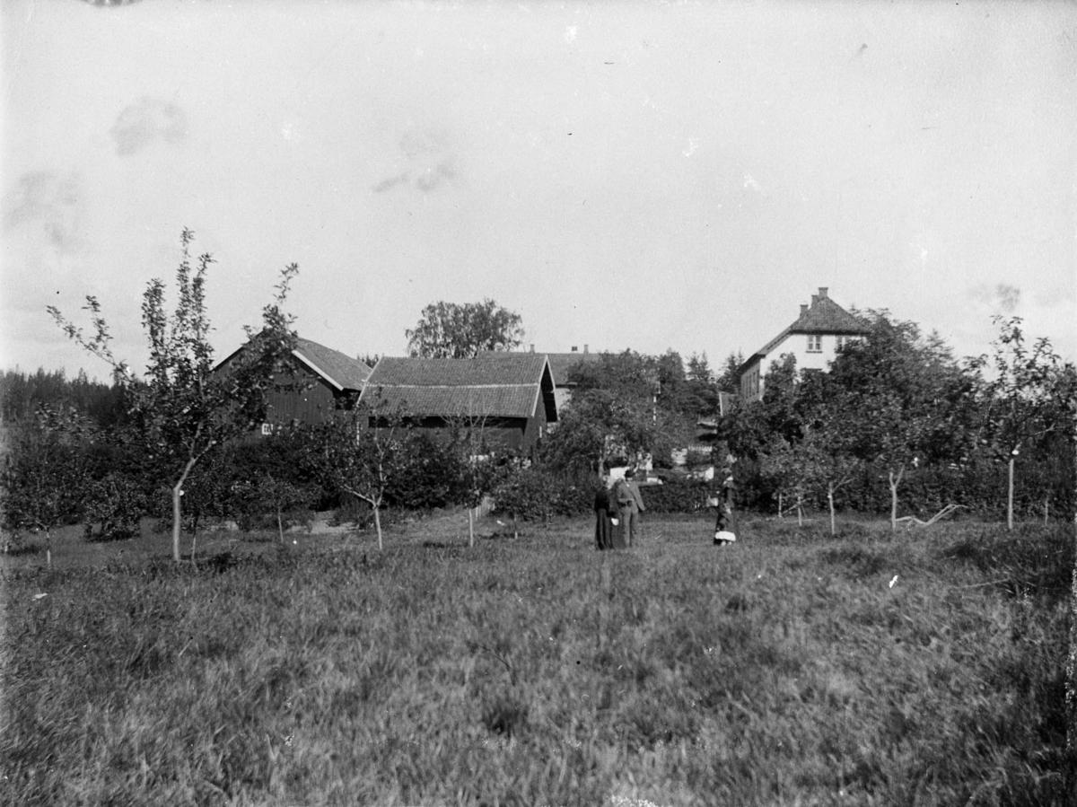 Frukthagen på Nordre Belsjø, mann, kvinner