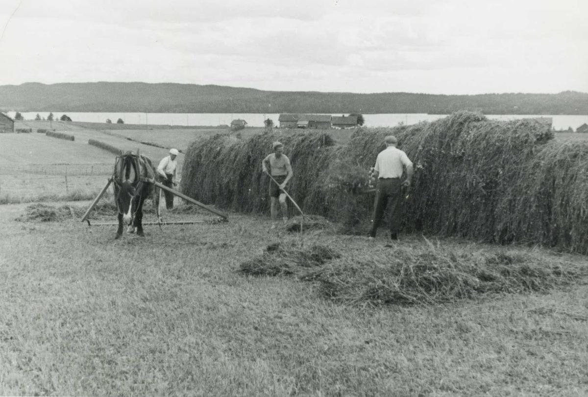 Høyonn i 1950 åra