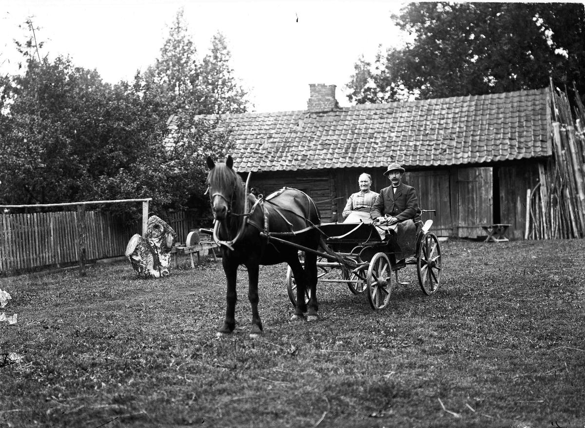 Portrett. Alf og Lovise Toftner med vogn og hest