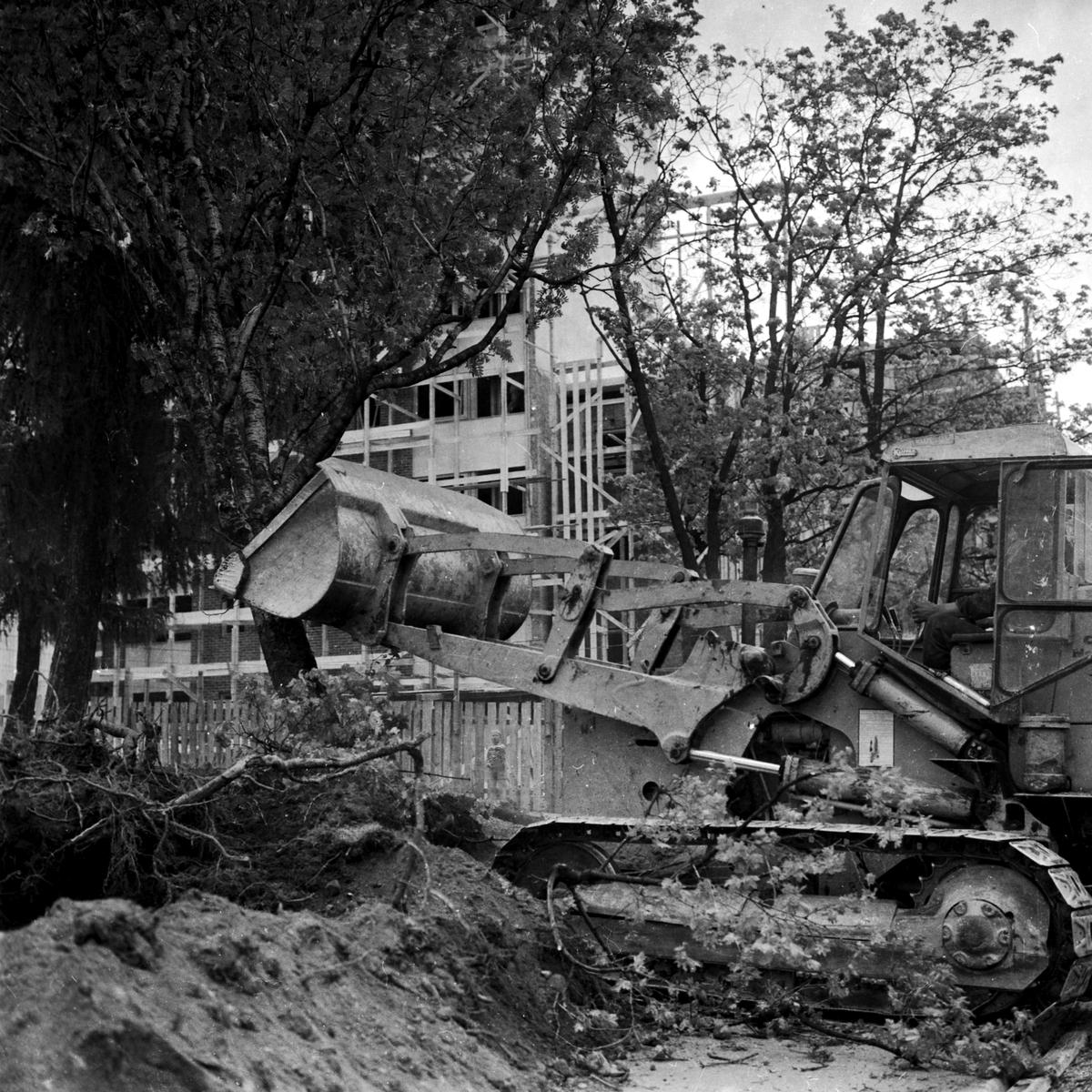 Skoletorvet Hamar. Fjerning av trær med bulldozer langs Storhamargaten. (HS 30. mai 1959)