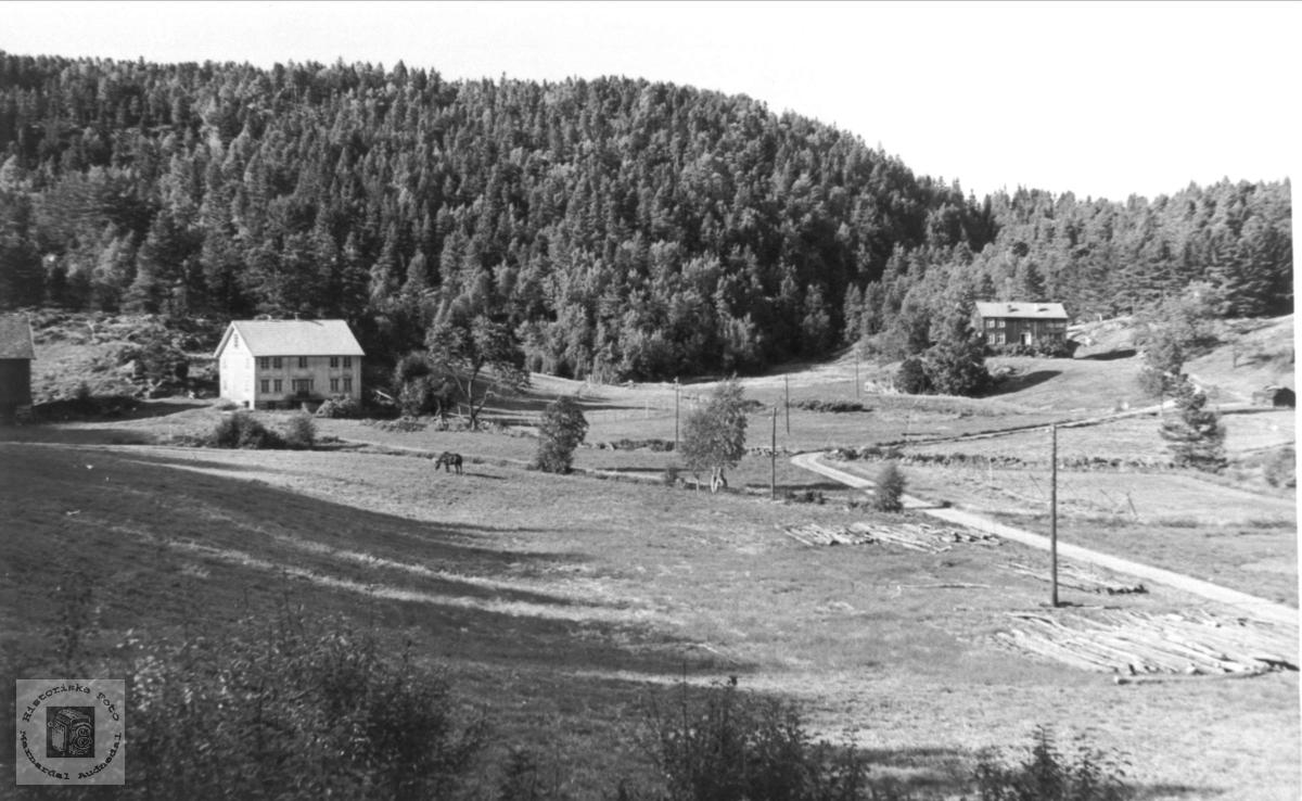 Røynesdal i Bjelland