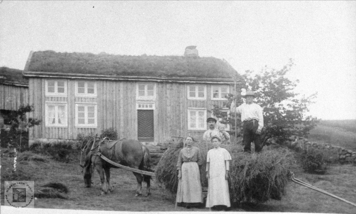 Høying på Solberg, Bjelland.