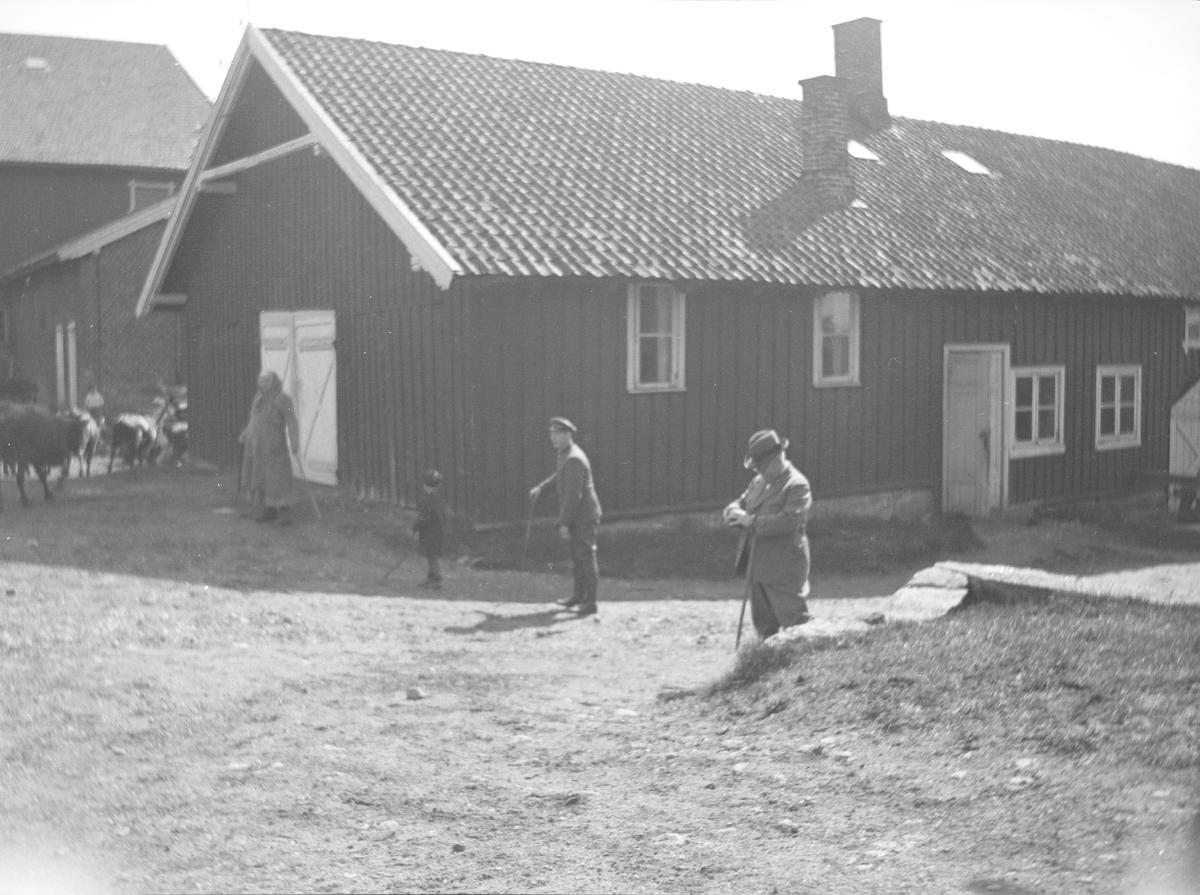 En pent kledd eldre mann, antakelig Christian Pierre Mathiesen, med spaserstokk er sammen med arbeidskledte voksne og et barn som driver en flokk med kyr fra gårdsplassen ut mot beite med stokker i hendene.