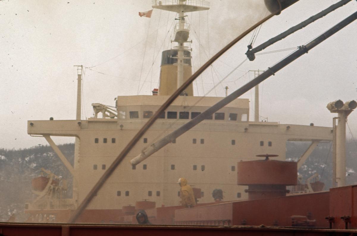M/S 'Vikara' (b.1973, Mitsubishi Heavy Industries Ltd., Kobe, Japan), under kornlasting på Newfoundland.