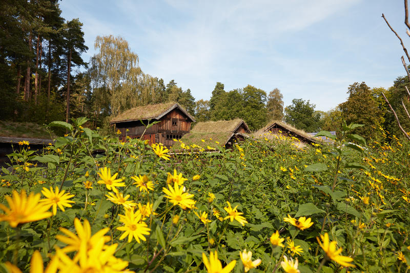 The Countrysider at Norsk Folkemuseum. Buildings. Trees, Flowers