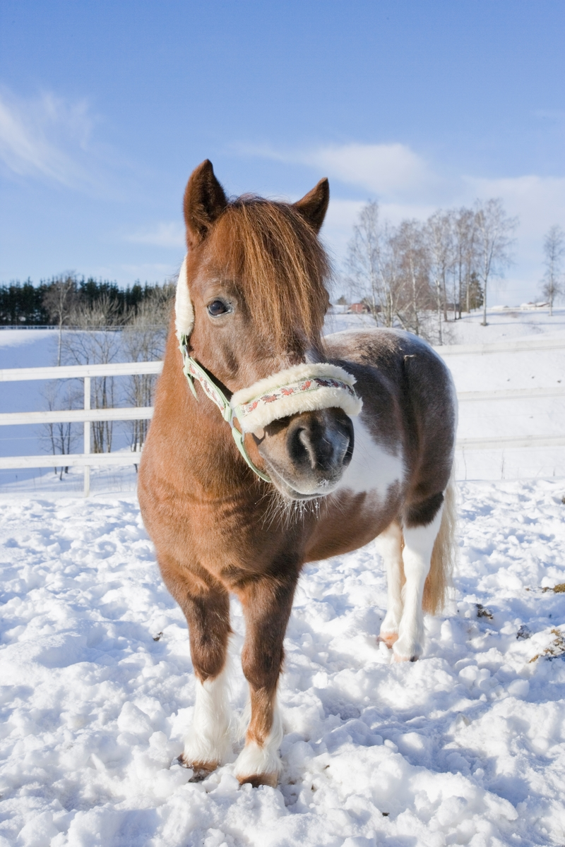 Hest i snøen
