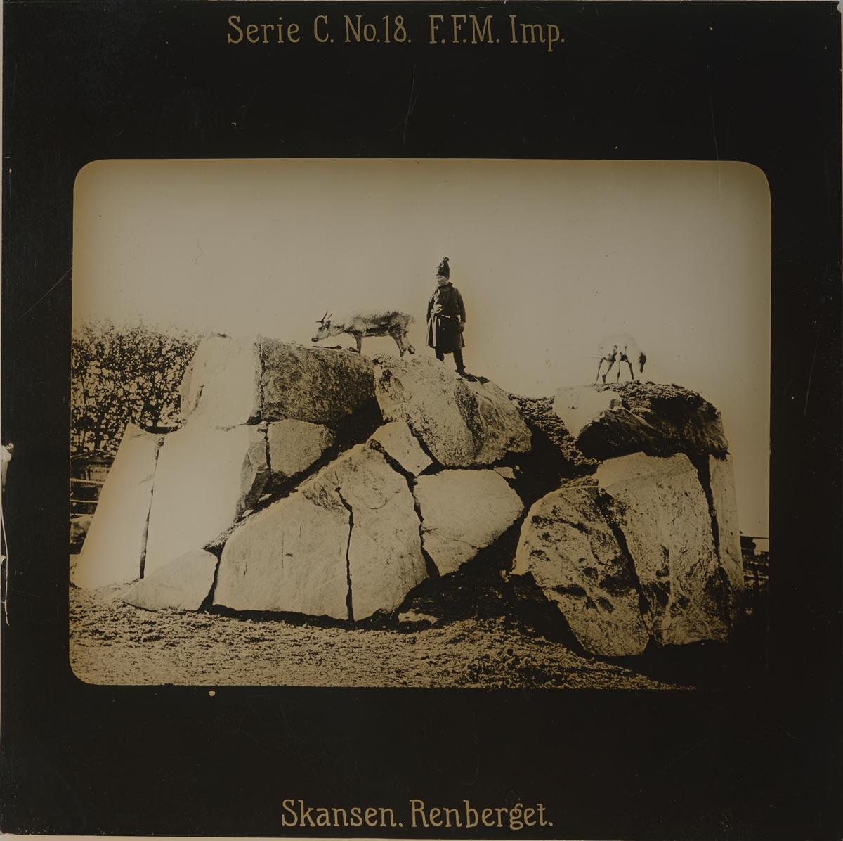 Renberget på Skansen. En man iklädd samisk dräkt samt två renar.
