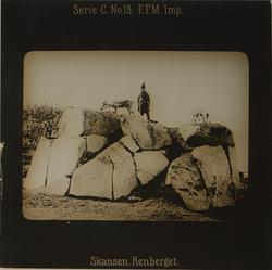 Renberget på Skansen. En man iklädd samisk dräkt samt två re