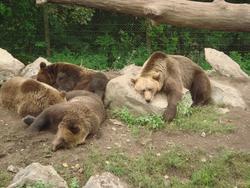 Väck inte den björn som sover