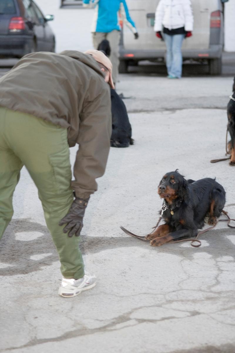 Dressurkurs for hund. Hundeier og hund øver på kommando.