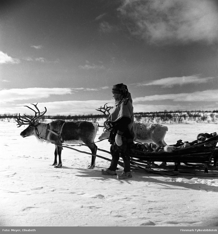 Johan Klemetsen Hætta fotografert sammen med to av kjørereinene. Fotografert av Elisabeth Meyer på reise mellom Statens Fjellstuer, sannsynligvis etter 2.verdenskrig.