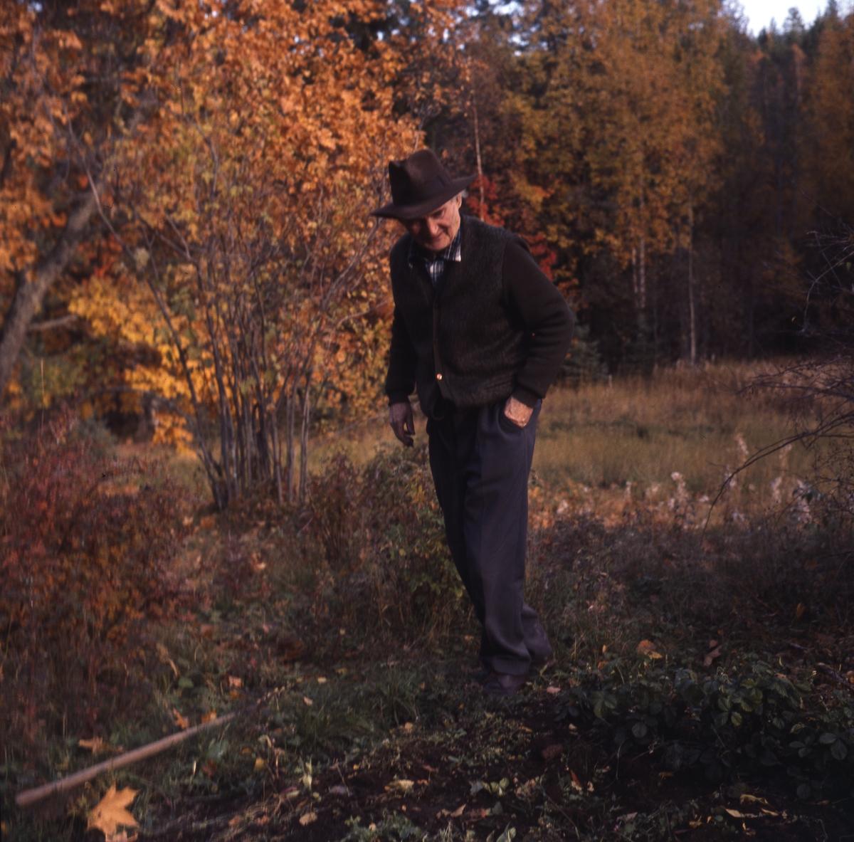 Albert Viksten vid sitt potatisland i en skogsglänta. Naturen har höstfärger.