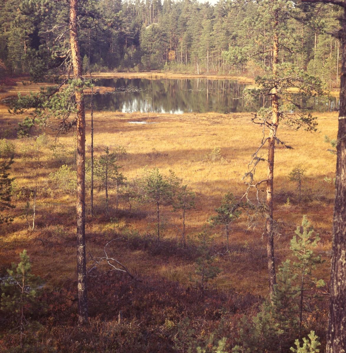 Höst vid skogstjärnen i Östra Höle, Rengsjö.