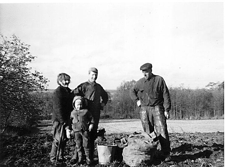 HäljesgårdenPotatisupptagning 1 nov. 1967Eber Nilsson, Svea Nilsson med sonen Evert samt Lars Eriksson.