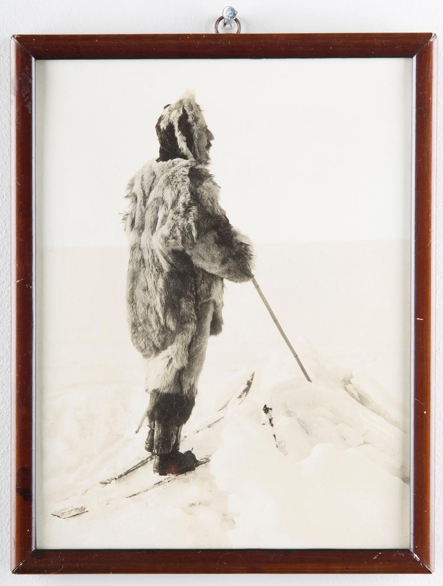 Roald Amundsen i pelsklær på ski.