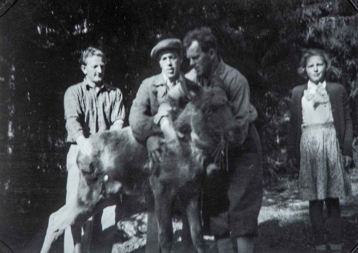 Gruppe 4 personer med en elg kalv. Fra venstre: Sigurd Sjøenden, Kåre Dagfinrud, Arild Dagfinrud og Gerd Dagfinrud. Elg kalven ble funnet av Arild Dagfinrud en morgen han var ute å brøytet snø. Kalven var blitt forlatt av sin mor. Kalven ble tatt vare på, og ble plasert i låven på Størydingen, der den ble foret opp og passet på igjennom vinteren. Bilde er i fra da kalven ble sluppet ut i det fri igjen.
