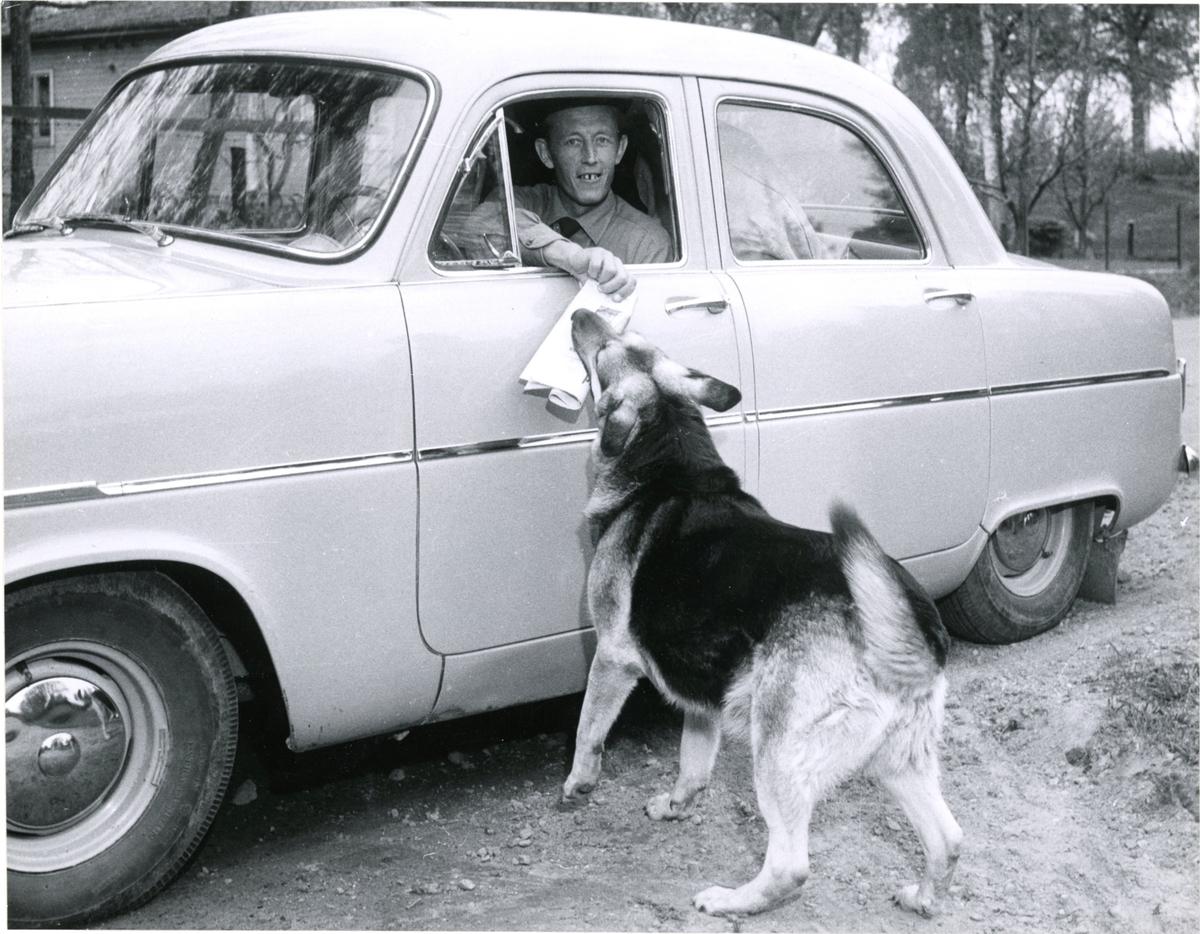 Lantbrevbäraren extra ordinarie förste postiljonen Enock Lindström (bilåkande) på linjen Vingåker-Hävla. Maj 1959.