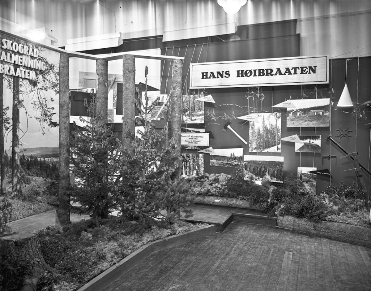 Fra bygdeutstillingen i 1955. Hans Høibraaten – om skog og arbeid i skogen.