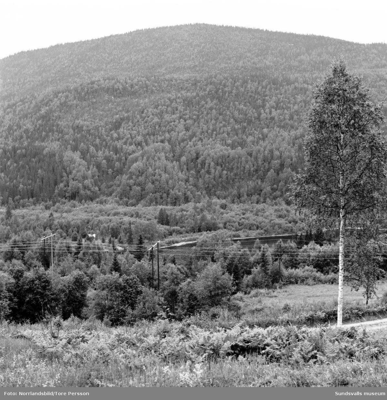 Utsikten i Järkvissle, bangolf, barn och får.