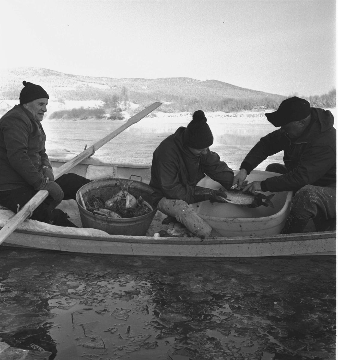 Tynset, Glomma, Sikfiske, Tre menn i båt, Vinter, Fisk, Fiskeutstyr
