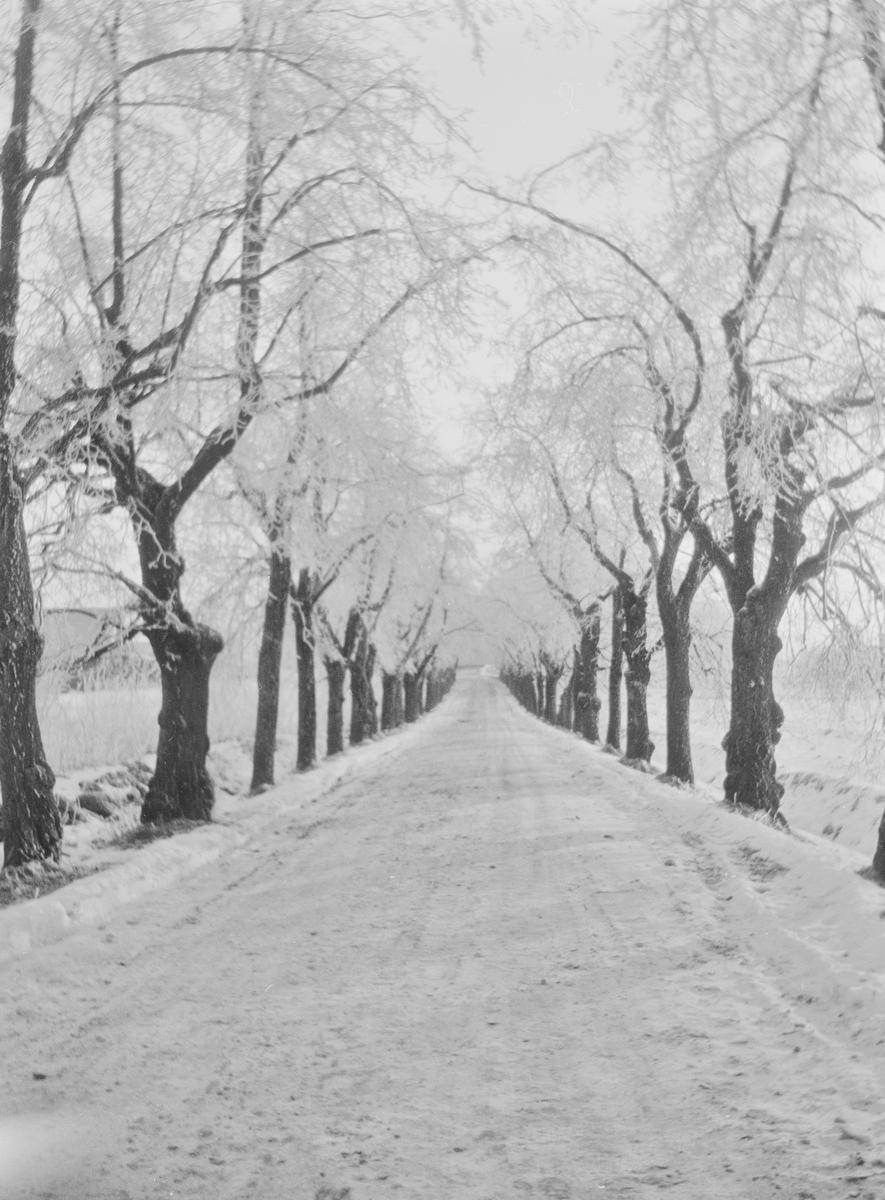 Lindealléen på Linderud gård sett i retning fra hovedhuset. Veien og trærne er dekket av snø og rimfrost.