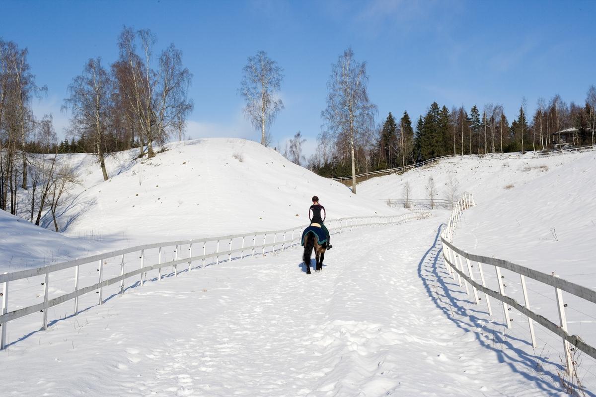 Hest og rytter i snøen