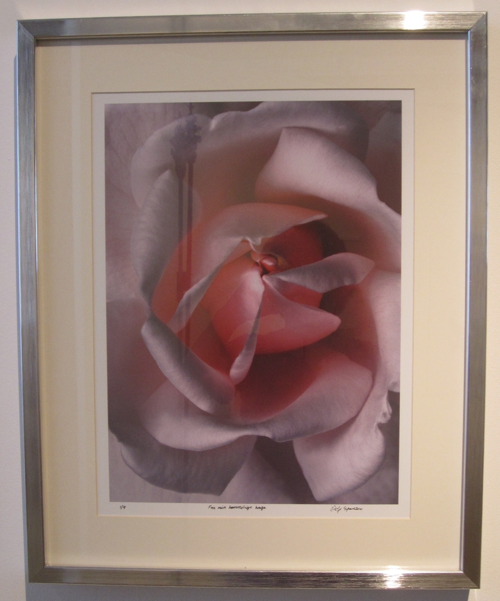 "Blomst/rose ""Fra min hemmelige hage"". [Foto]"