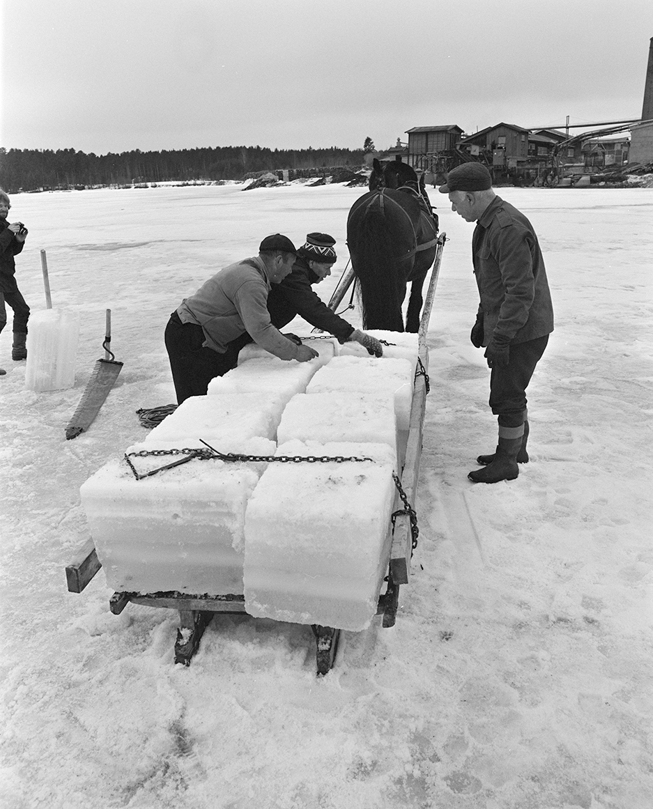 Isskjæring, Rokosjøen, Løten. Lasting av isblokker på slede, lasset sikres.