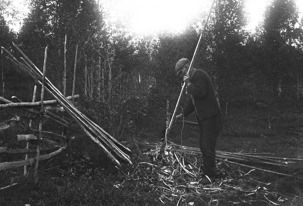 """""""Värmland. Jösse hd. Mangskog sn. Bjurbäcken. Barkning av gärdsgårdsstör."""""""