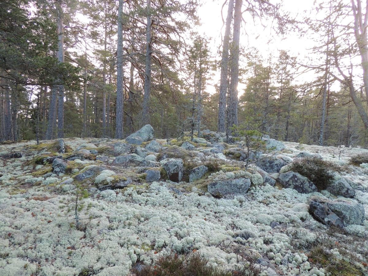 Arkeologisk utredning, Markim 3:1, stensättning, Husby, Markims,  socken, Uppland 2017