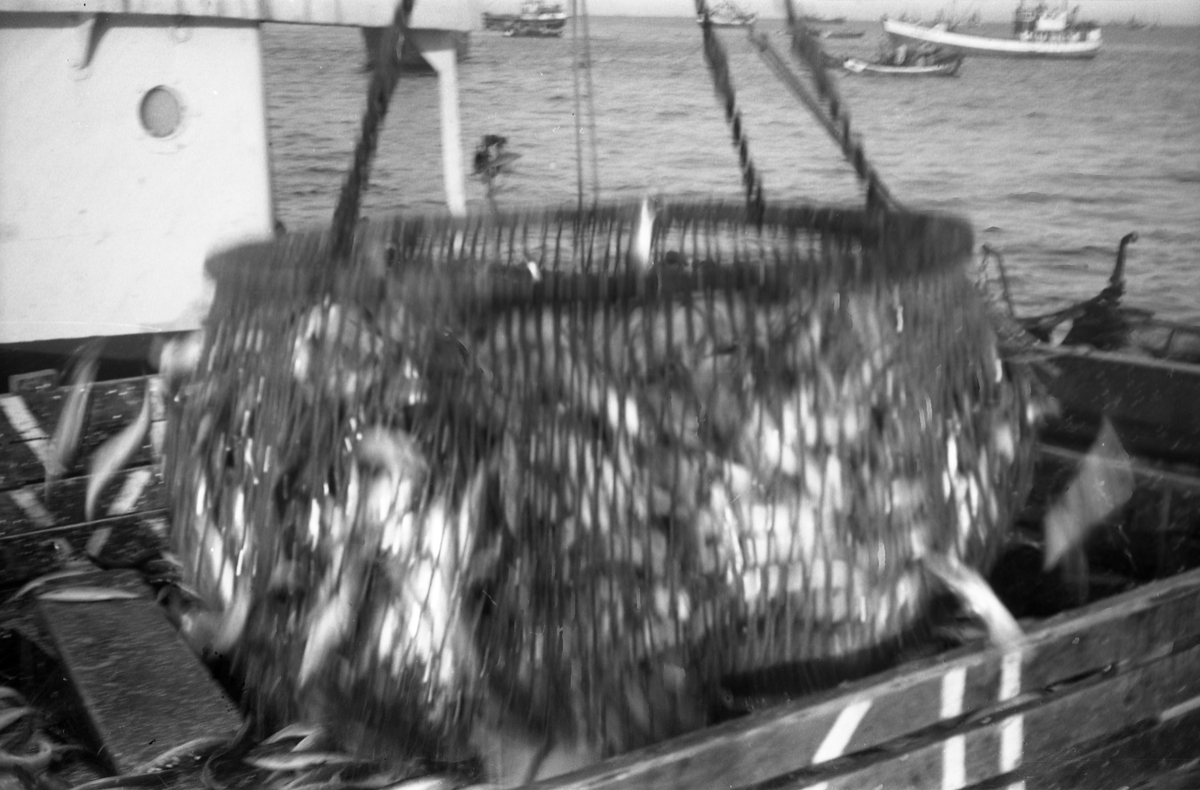 Serie på 10 bilder fra et fiskefelt, trolig sildefiske med not. Bildene er tatt av en person ombord i ei skøyte som trolig heter KIDD, og viser ulike faser i fangstprosessen. Hvor bildene er tatt er ukjent. Ingen av personene, er identifisert.