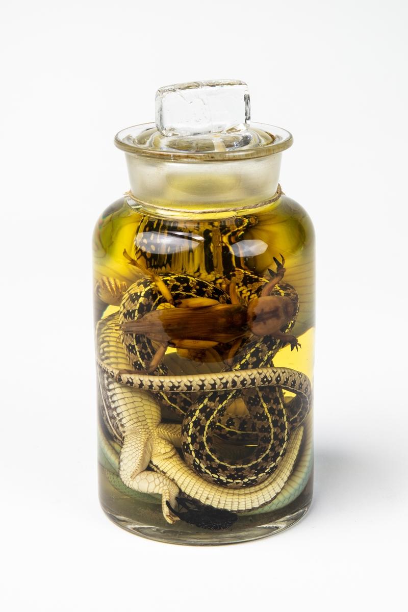 Spritpreparat med flera olika djur: Orm, ödla, groda samt diverse insekter Etiketttext: Från Jamaika. Skänkt af stud. G. Carlberg