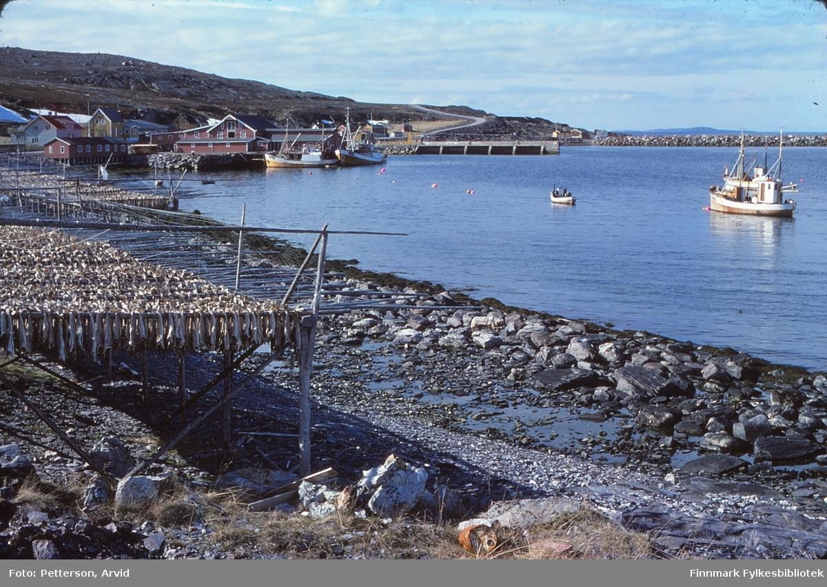 Fiskemottak i Snefjord i Måsøy, i 1977. En god del fisk henger til tørk på fiskehjeller ved fjæra.